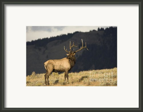 Majestic Glow Framed Print By Robert Weiman