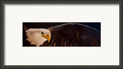 Majesty Framed Print By Julie Bond