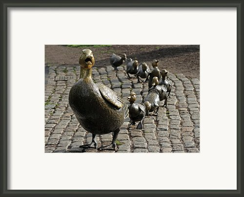 Make Way For Ducklings Framed Print By Juergen Roth