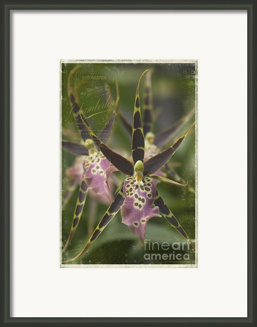 Maliko Dreams Framed Print By Sharon Mau