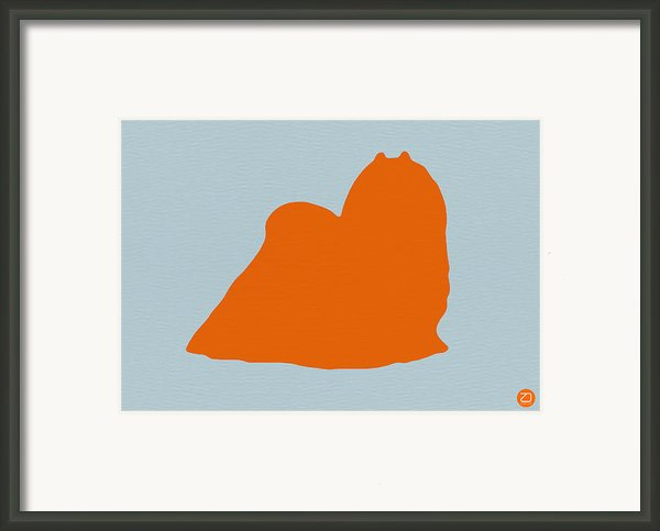 Maltese Orange Framed Print By Irina  March