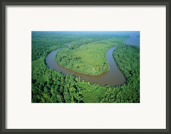Mangrove Forest In Mahakam Delta Framed Print By Cyril Ruoso
