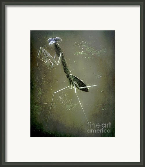 Mantis Ii Framed Print By Arne Hansen
