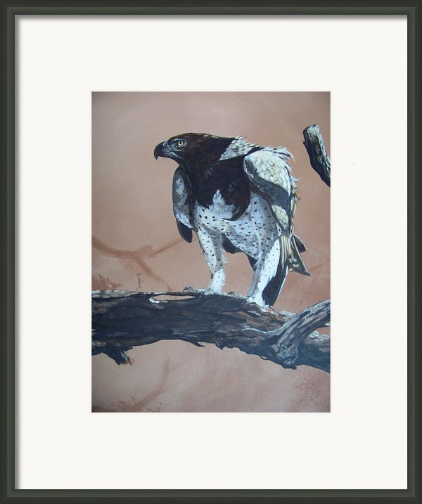 Martial Eagle Framed Print By Robert Teeling