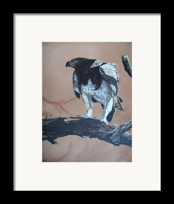 Martial Eagle Framed Print By Robert Teeling