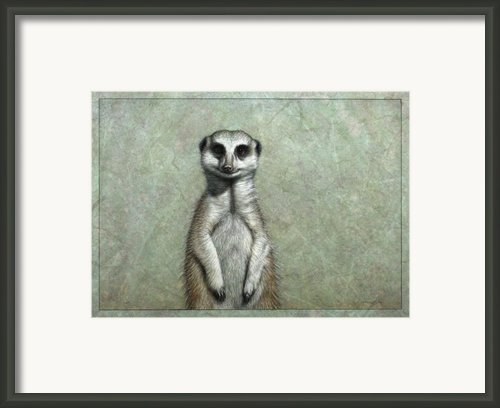 Meerkat Framed Print By James W Johnson