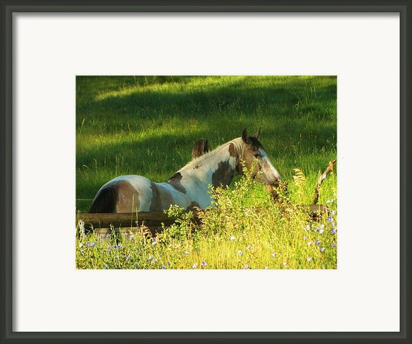 Meet Me At The Fence Framed Print By Feva  Fotos