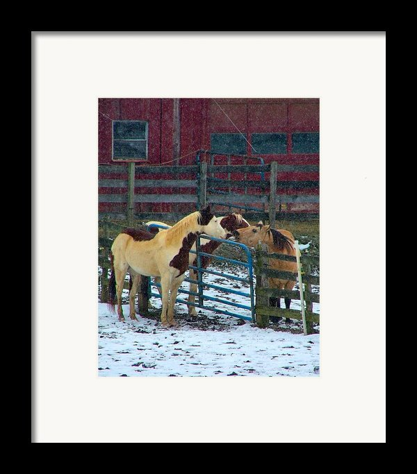 Meeting Of The Equine Minds Framed Print By Julie Dant