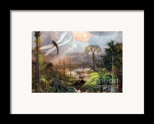 Meganeura In Upper Carboniferous Framed Print By Science Source