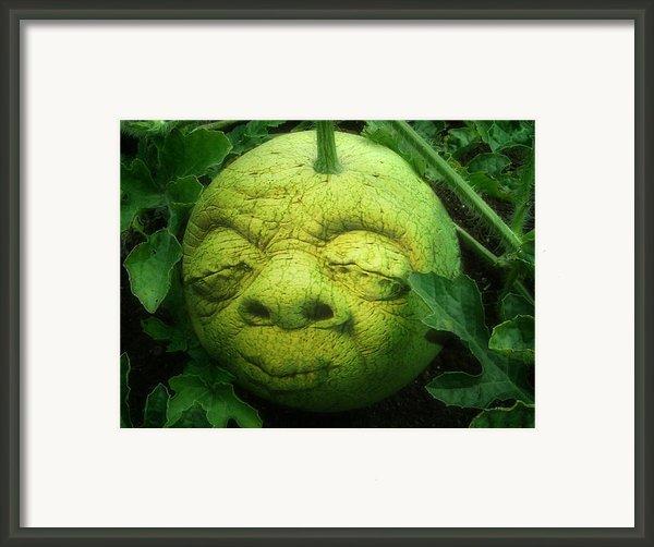 Melon Head Framed Print By Jack Zulli