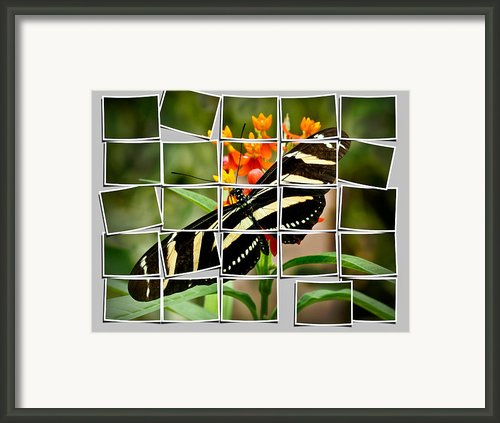 Messed Up Butterfly Framed Print By Jean Noren