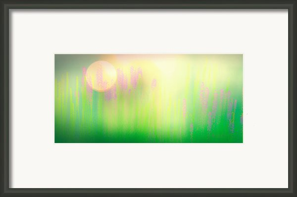 Mid Summer Morning Framed Print By Bob Orsillo