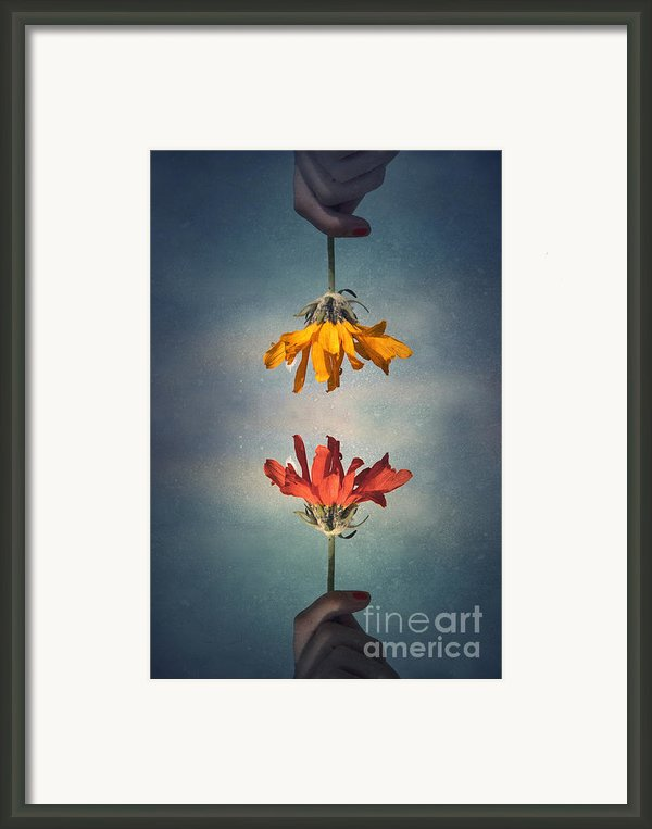 Middle Ground Framed Print By Tara Turner