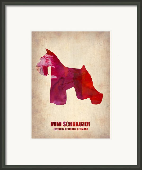 Miniature Schnauzer Poster Framed Print By Irina  March