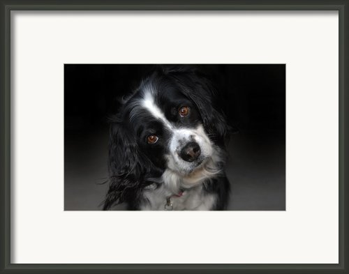 Missy Framed Print By Skip Willits