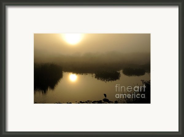 Misty Morning In The Marsh Framed Print By Nancy Greenland