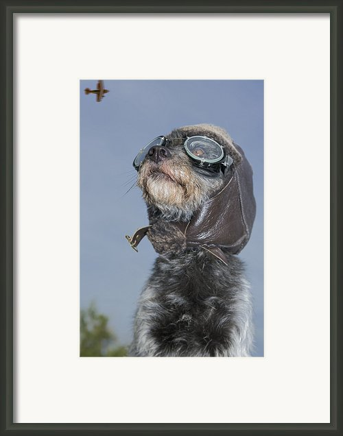 Mixed Breed Dog Dressed In Leather Cap Framed Print By Darwin Wiggett