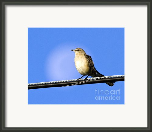 Mocking Bird Moon Framed Print By Lamarre Labadie