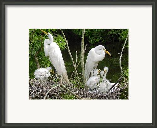 Mom N Pop N Chicks Framed Print By Suzanne Gaff