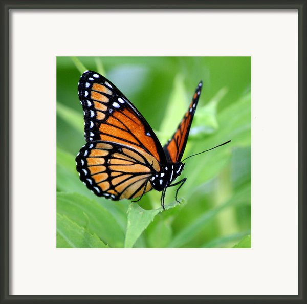 Monarch Dreaming  Framed Print By Neal  Eslinger