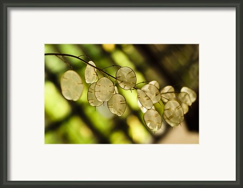 Money On Trees Framed Print By Christi Kraft