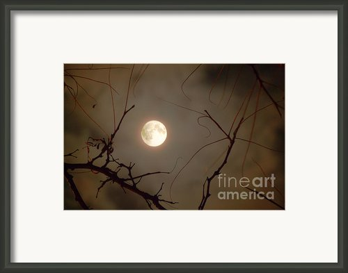 Moon Behind Branches Framed Print By Deborah Smolinske