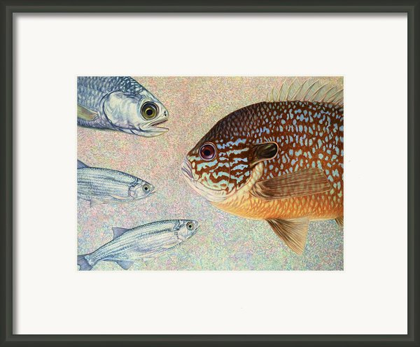 Mooneyes Sunfish Framed Print By James W Johnson