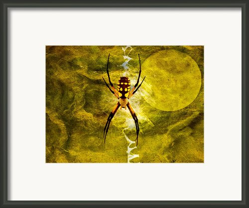 Moonlit Web Framed Print By J Larry Walker