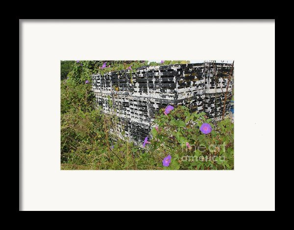 Morning Glories And Crab Traps Framed Print By Theresa Willingham