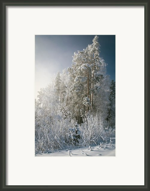 Morning Framed Print By  Ilya Moskovets