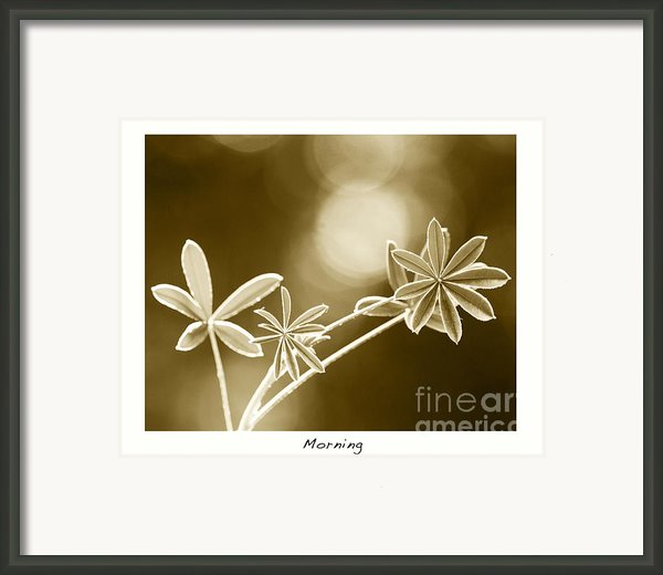 Morning Framed Print By Artist And Photographer Laura Wrede