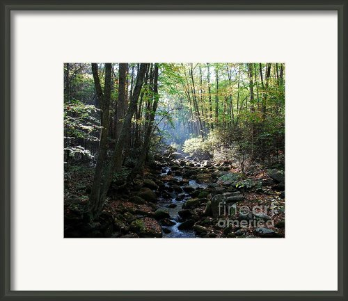 Morning Light 1 Framed Print By Mel Steinhauer
