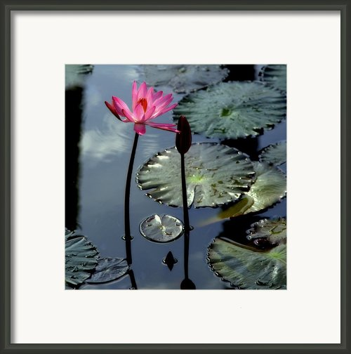 Morning Light Framed Print By Karen Wiles