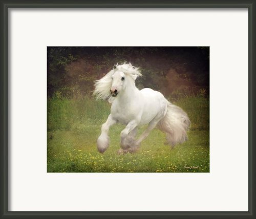 Morning Mist C Framed Print By Fran J Scott