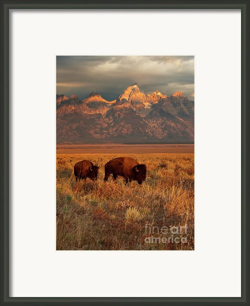 Morning Travels In Grand Teton Framed Print By Sandra Bronstein