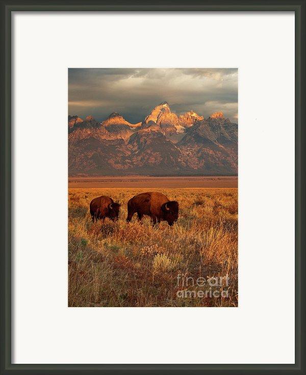 Morning Travels In Grand Teton Framed Print By Sandra Bronstein