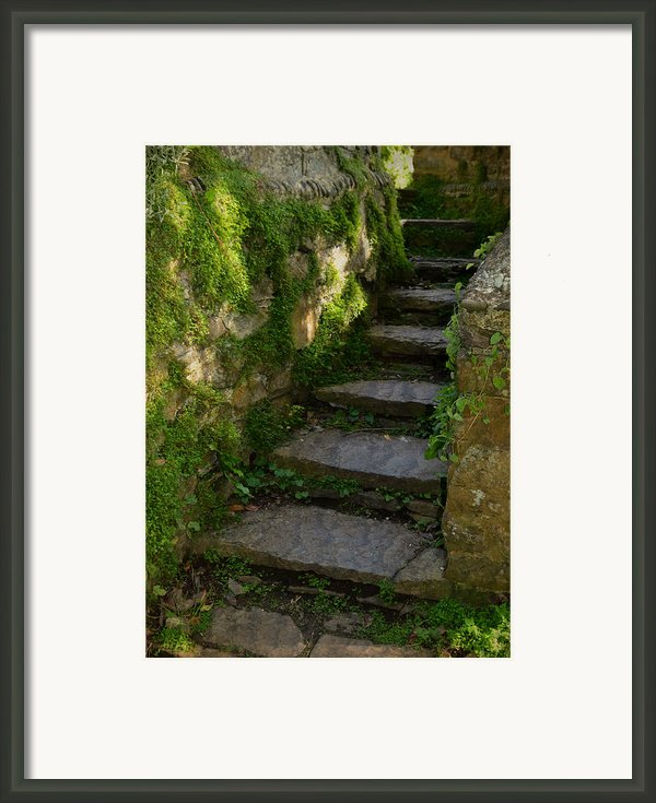 Mossy Steps Framed Print By Carla Parris