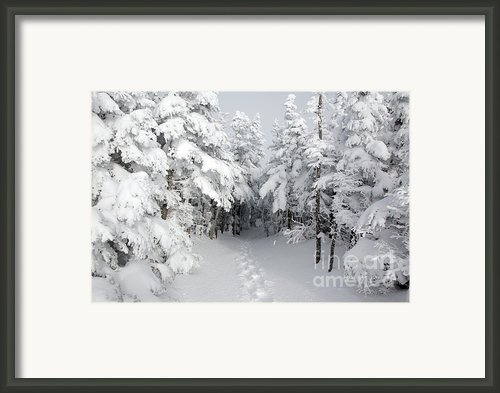 Mount Osceola Trail - White Mountains New Hampshire Framed Print By Erin Paul Donovan
