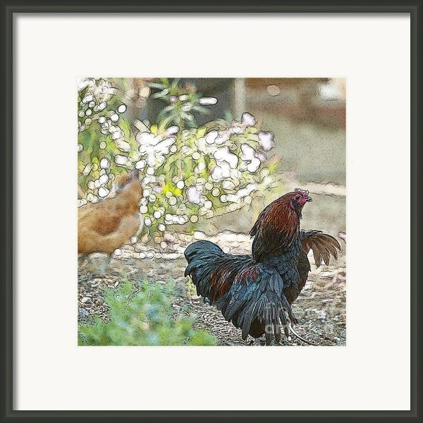 Mr. Rooster Struts Framed Print By Artist And Photographer Laura Wrede