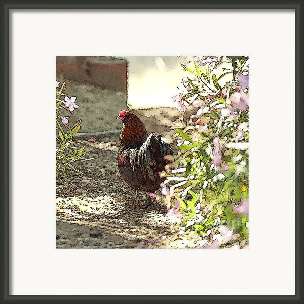 Mr. Rooster Takes A Stroll Framed Print By Artist And Photographer Laura Wrede