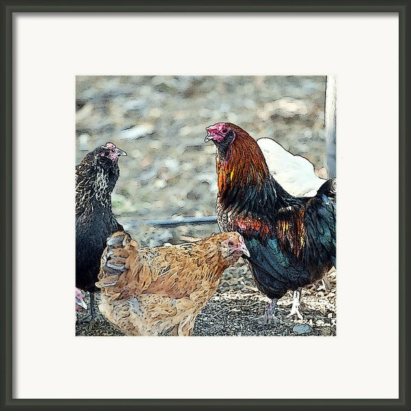 Mr. Rooster Talking With The Chickens Framed Print By Artist And Photographer Laura Wrede