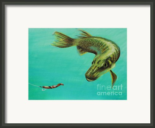 Muskie And The Lure Framed Print By Jeanne Fischer
