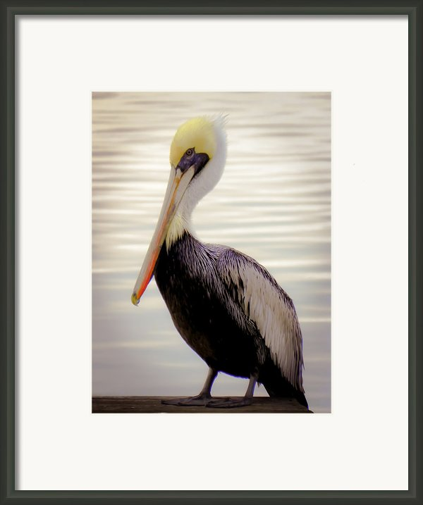 My Visitor Framed Print By Karen Wiles