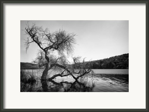 Napa Lake Framed Print By Francesco Emanuele Carucci