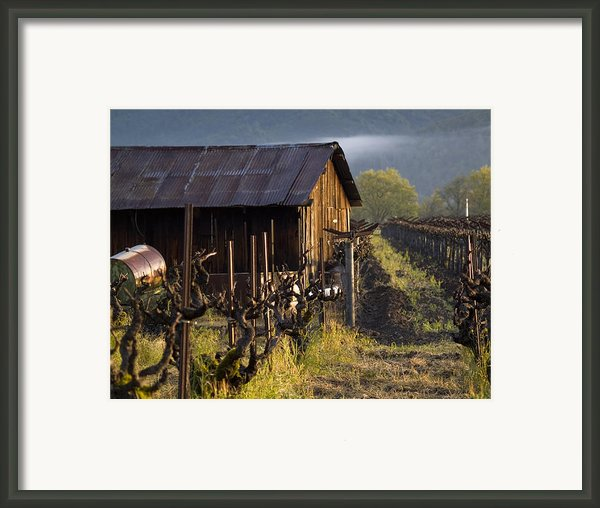 Napa Morning Framed Print By Bill Gallagher