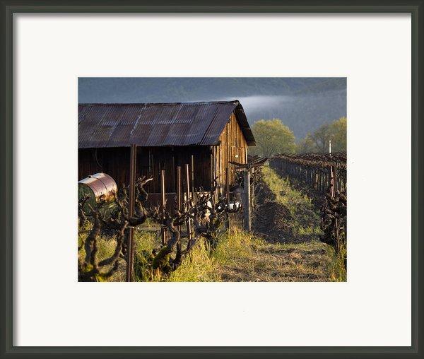 Napa Morning Framed Print By Bill Gallagher