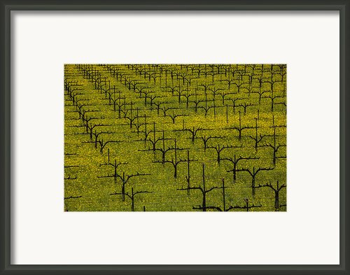 Napa Mustard Grass Framed Print By Garry Gay