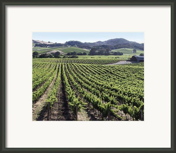 Napa Valley Vineyard Framed Print By Dee  Savage