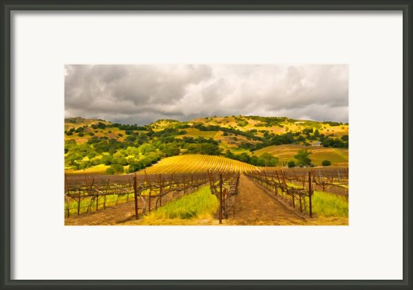 Napa Vineyard Framed Print By Mick Burkey