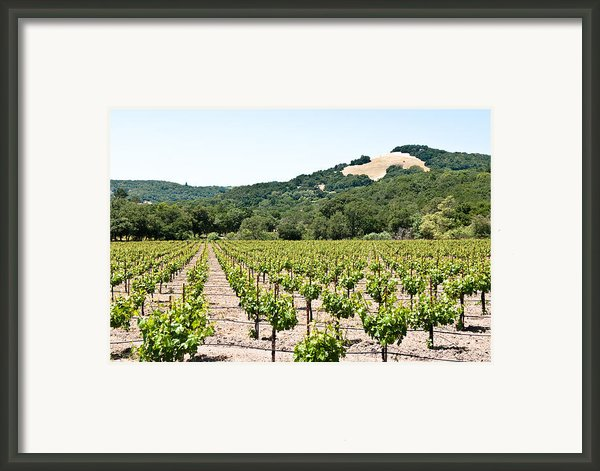 Napa Vineyard With Hills Framed Print By Shane Kelly